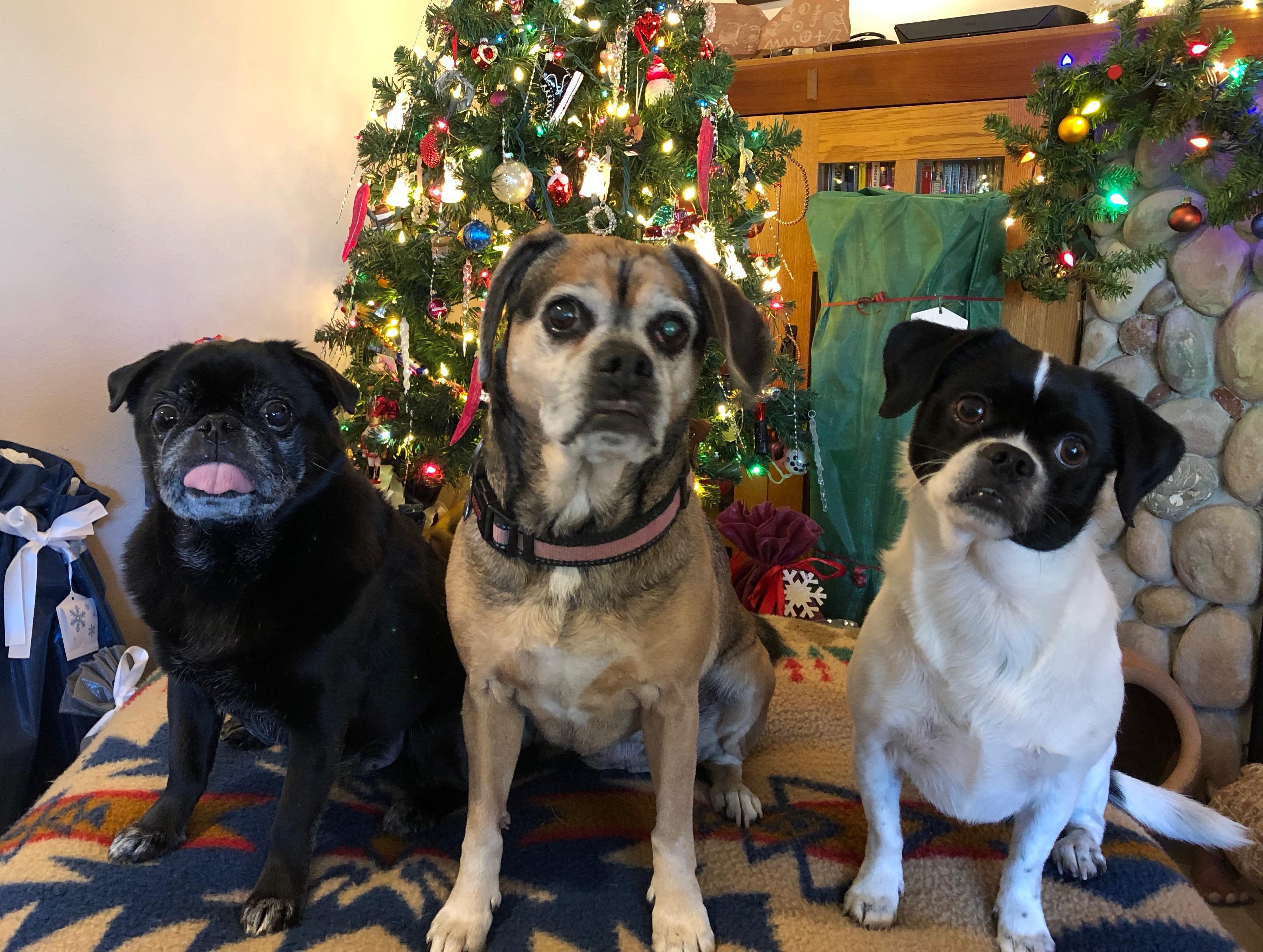 PugPugglePugMutt-Christmas-2018.jpeg