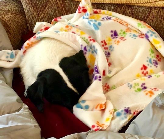 Elly-under-blanket.jpeg